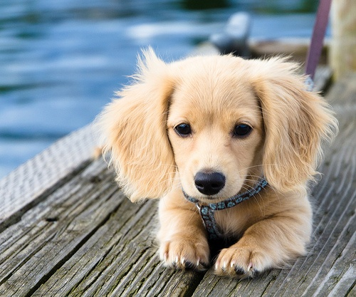 dogs images