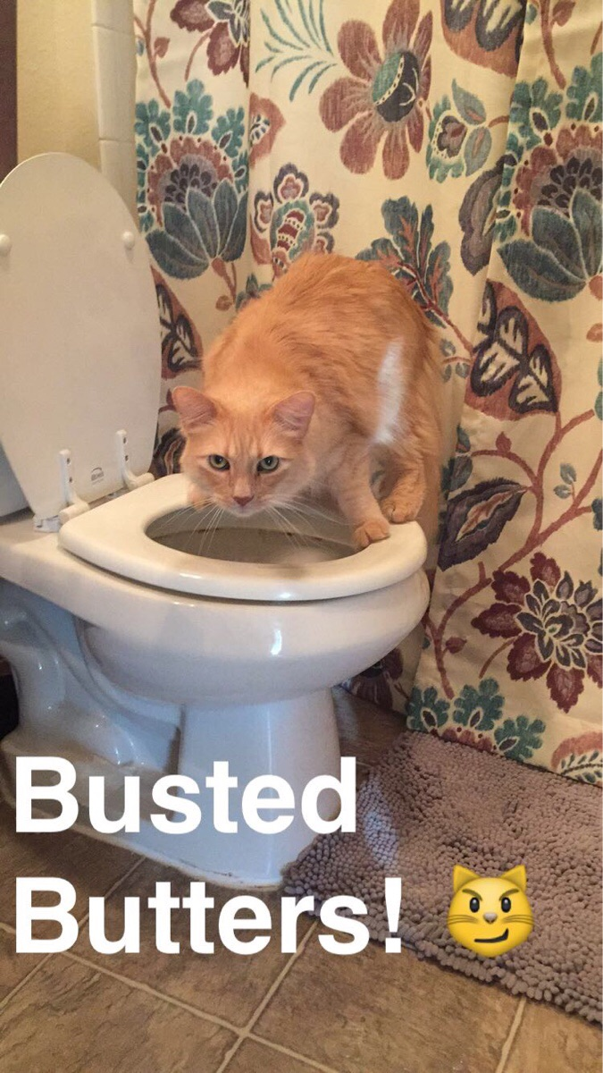 30 The Funniest Cat Pics of All Time