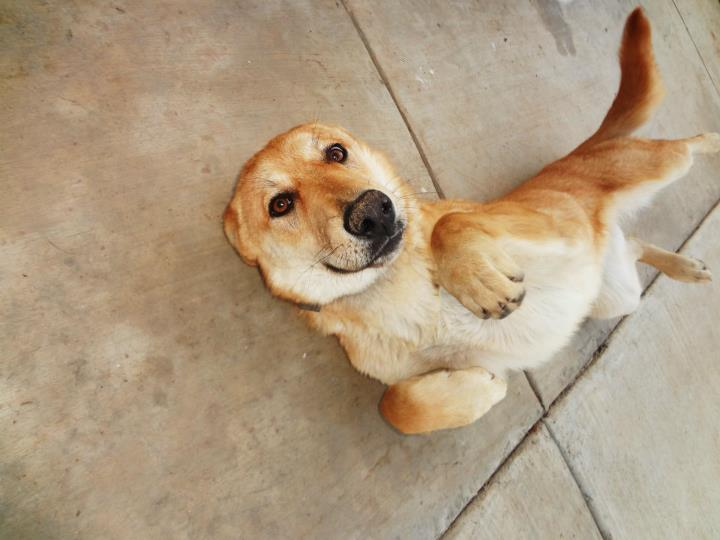 funny dog images