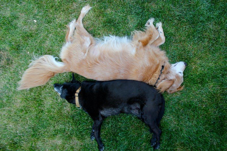 funny dog photos