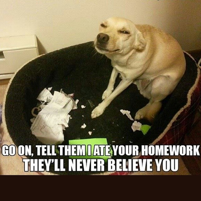 funny dog pics with captions