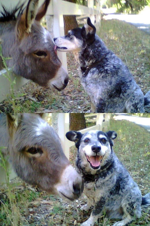funny dogs photos
