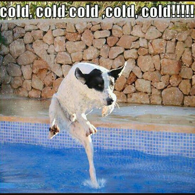 funny images of dogs