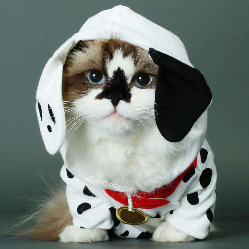 funny pics of cats