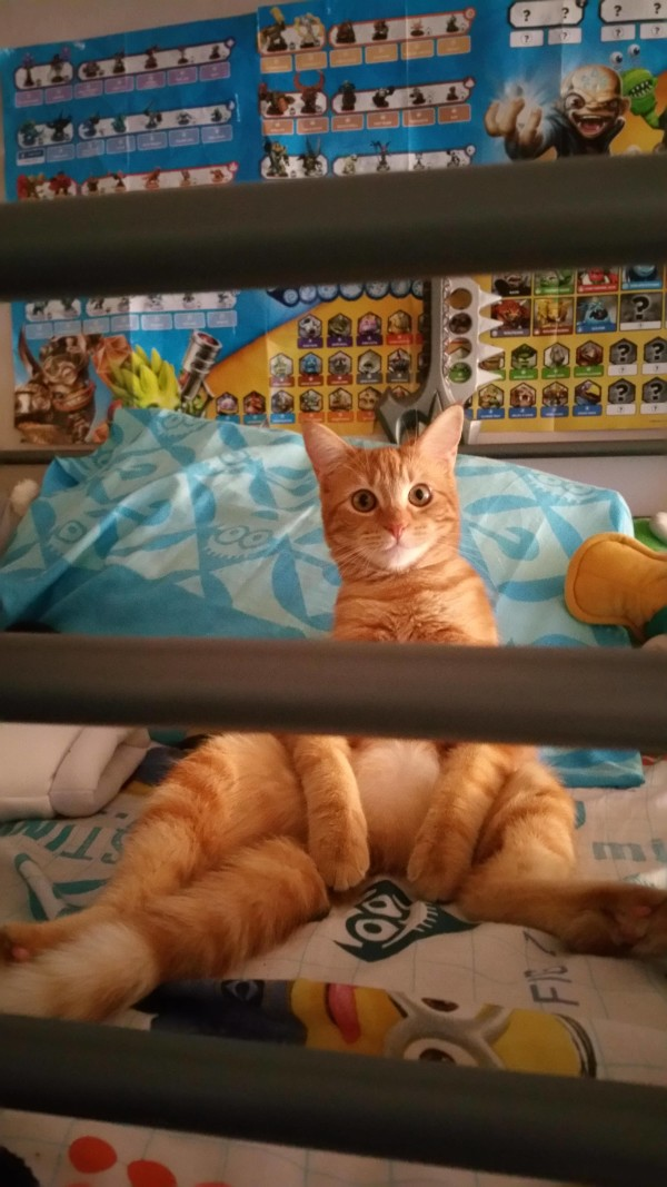 funny pictures cats