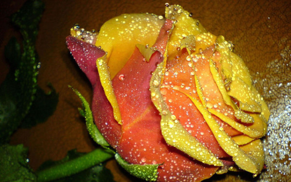 images of beautiful flowers
