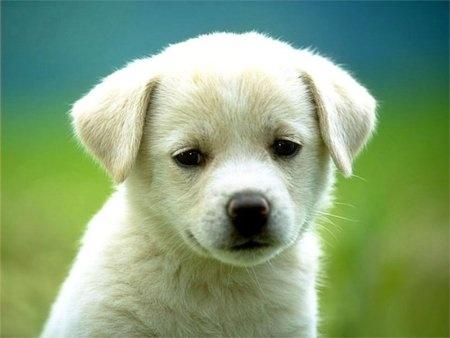 photos of puppies