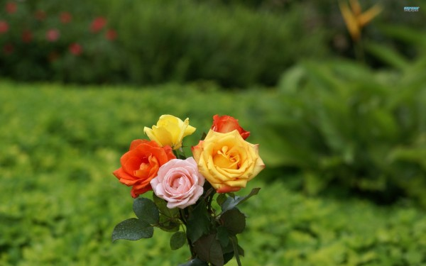 pictures of beautiful flowers