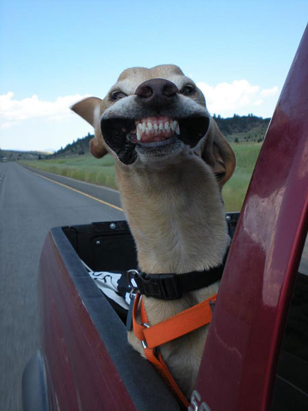pictures of funny dogs