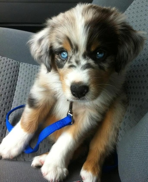 pictures of puppys