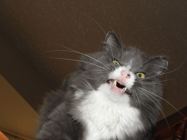 pictures of funny animals