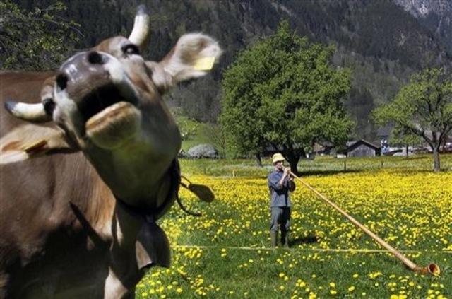 very funny animals
