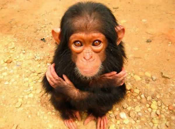 baby monkey pictures