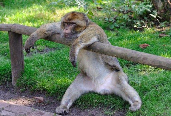 cute monkey images