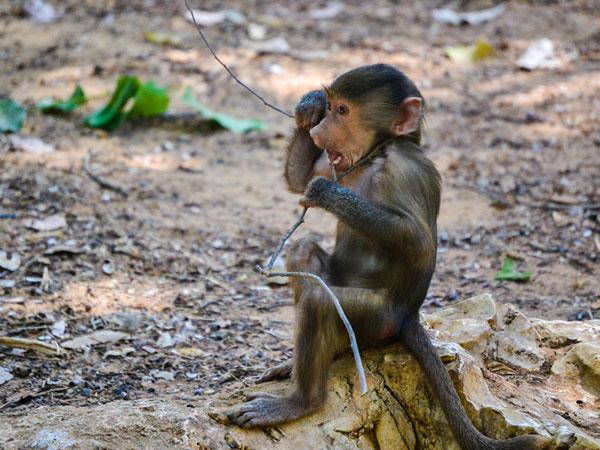 cute monkey pics