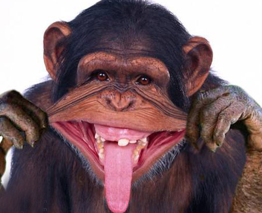 funny images of monkey