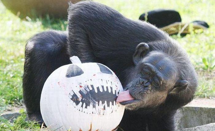 funny looking monkey