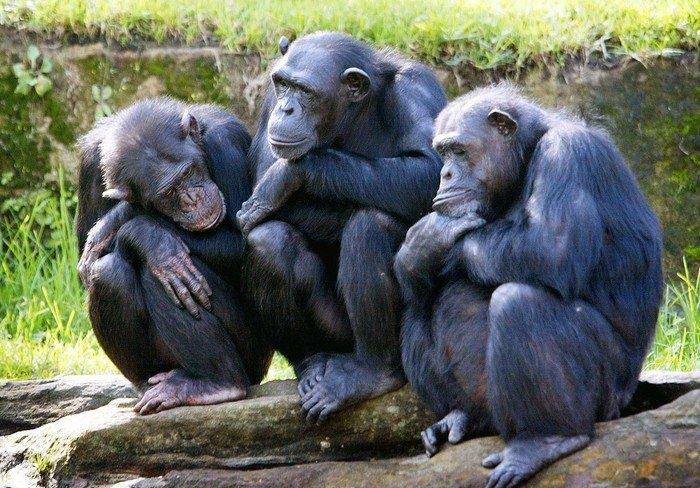 funny looking monkeys
