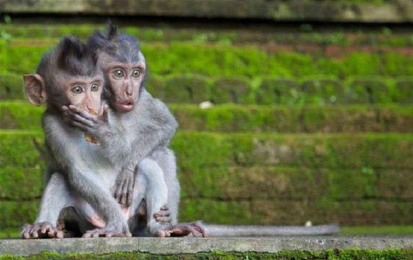 funny monkey photos