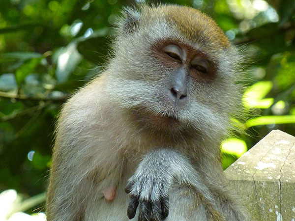 funny monkey pictures for kids
