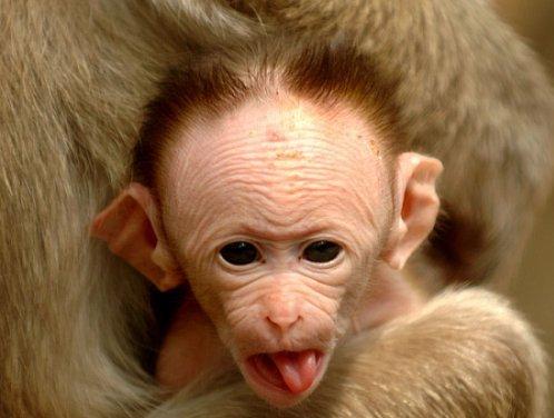 funny monkeys pics