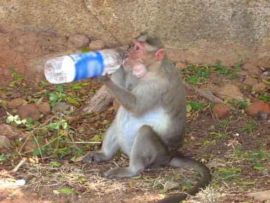 funny pics of monkeys