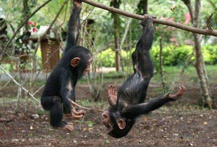 funny pictures of monkeys