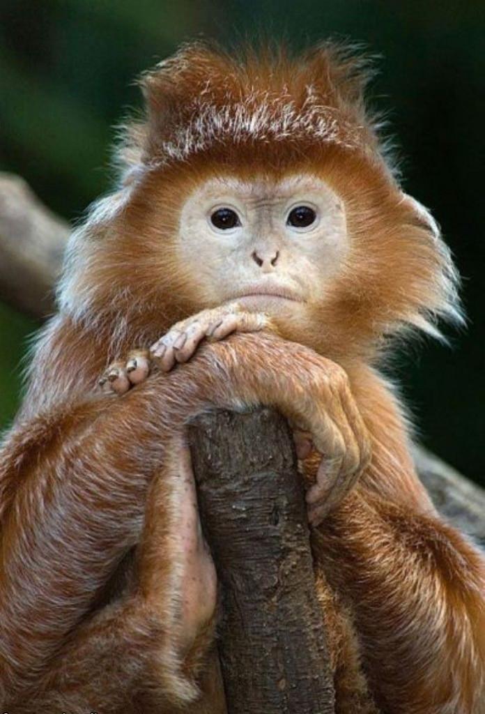 images of funny monkeys