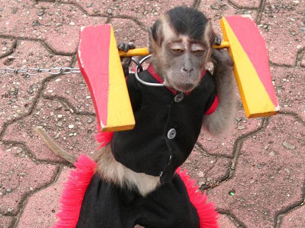images of monkey