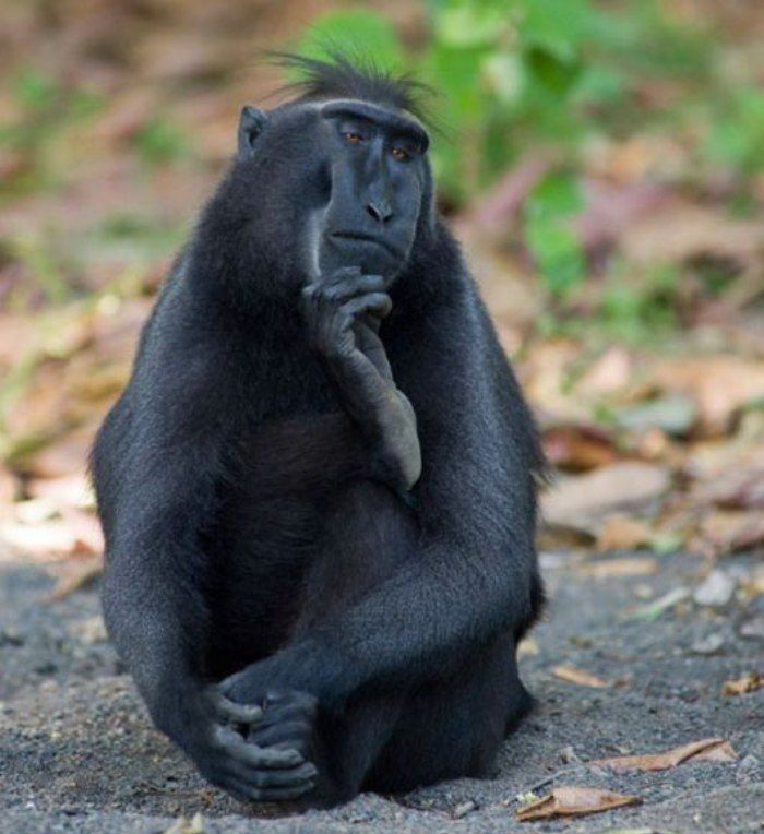 images of monkeys