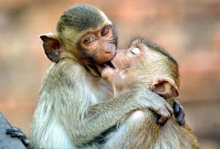 monkey funny photos