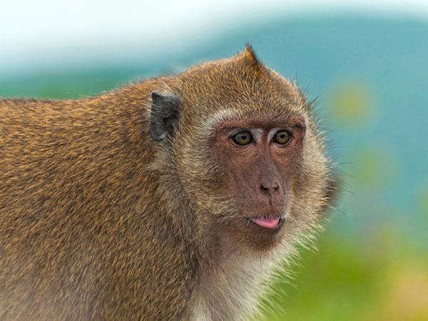 monkey funny pics