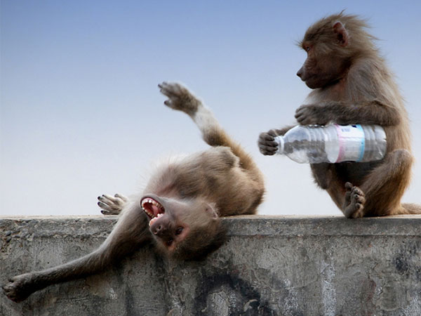 funny monkey wallpaper - photo #40