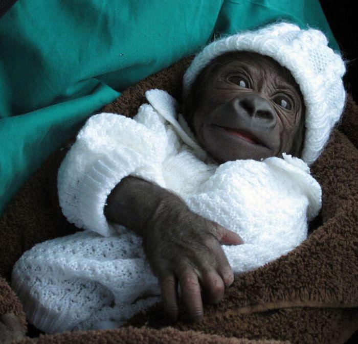 monkey images funny