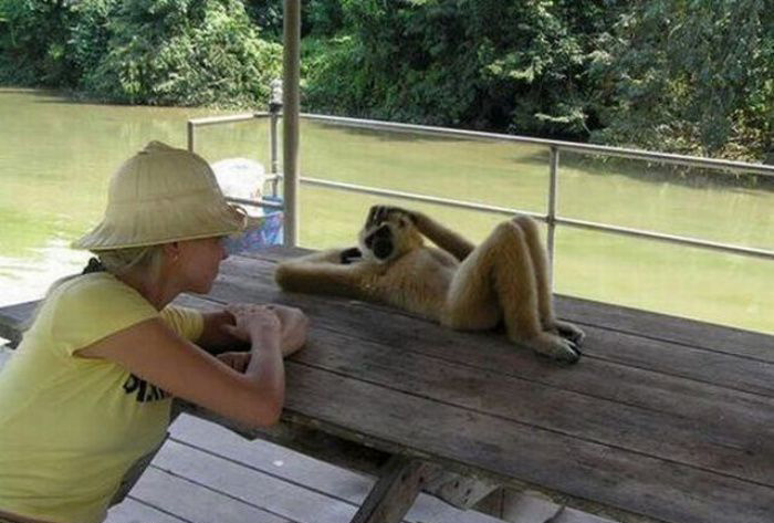 monkey photos funny