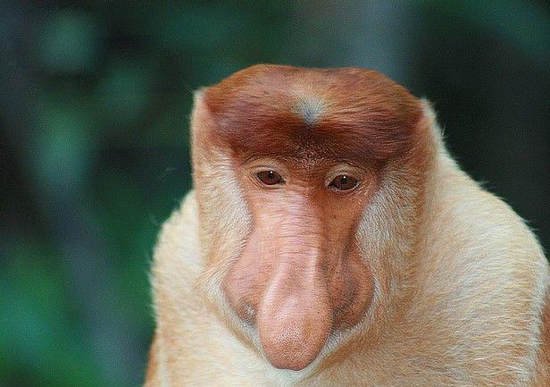 monkey pics funny