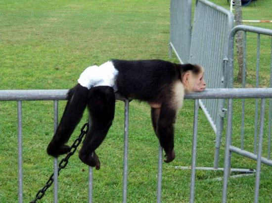 monkey pictures funny
