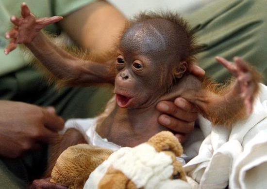 monkeys funny
