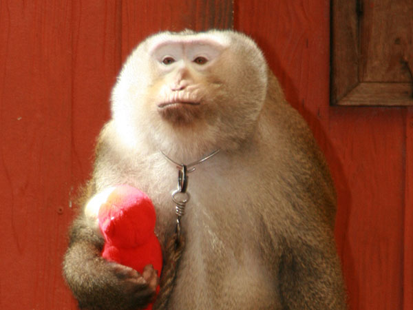monkeys images