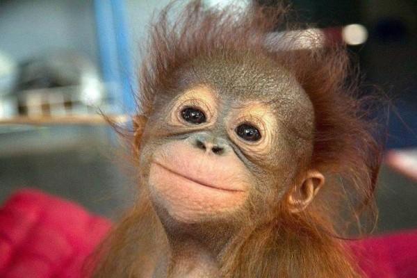 pics of funny monkeys