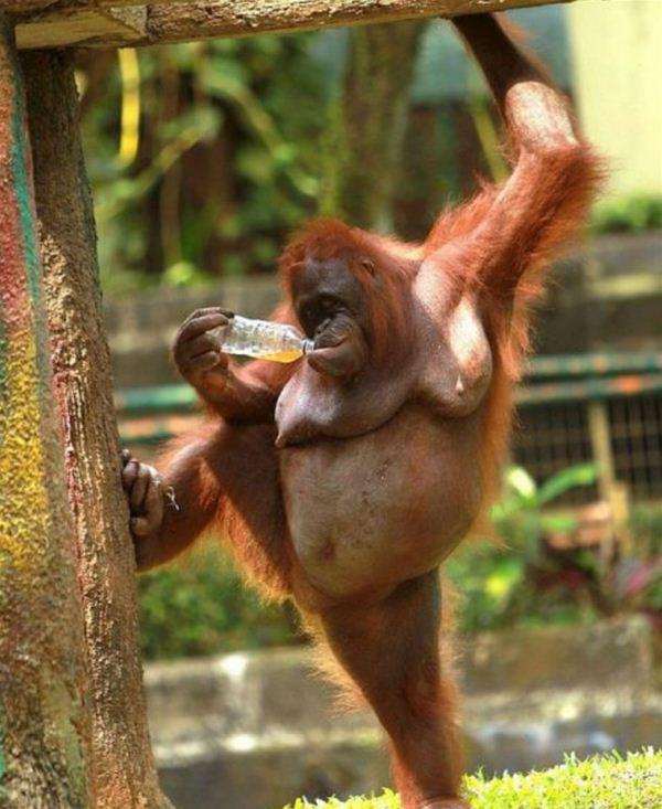 pics of monkey