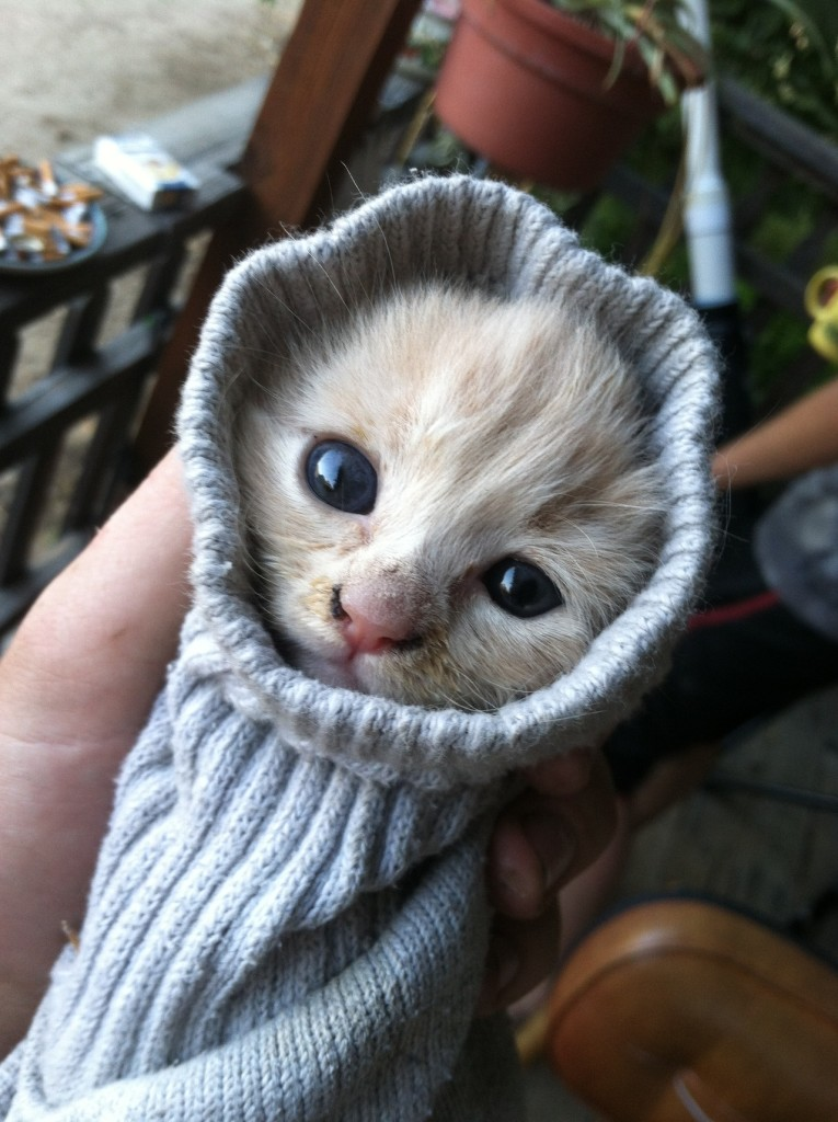The 50 Best Funny Kitten Pictures of All Time