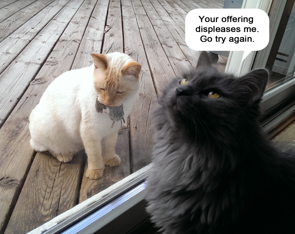 cat funny pictures