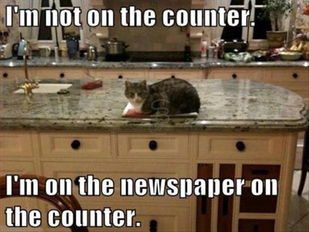 cats doing funny things