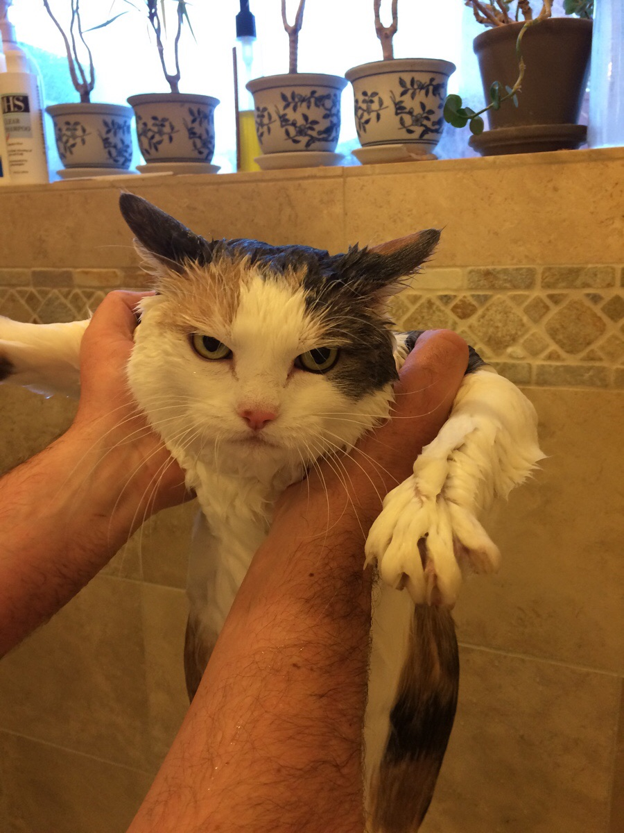 The 50 Best Funny Kitten Pictures of All Time Pictures Funny