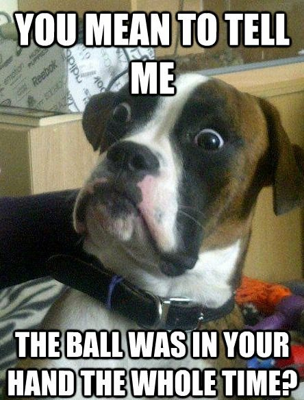 dog funny pictures