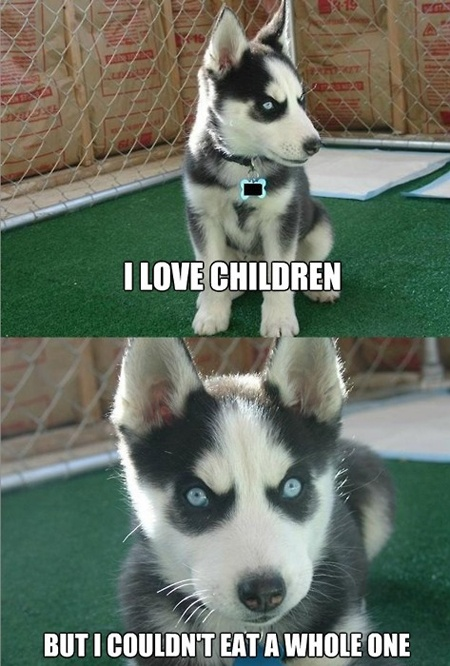 dog pictures funny