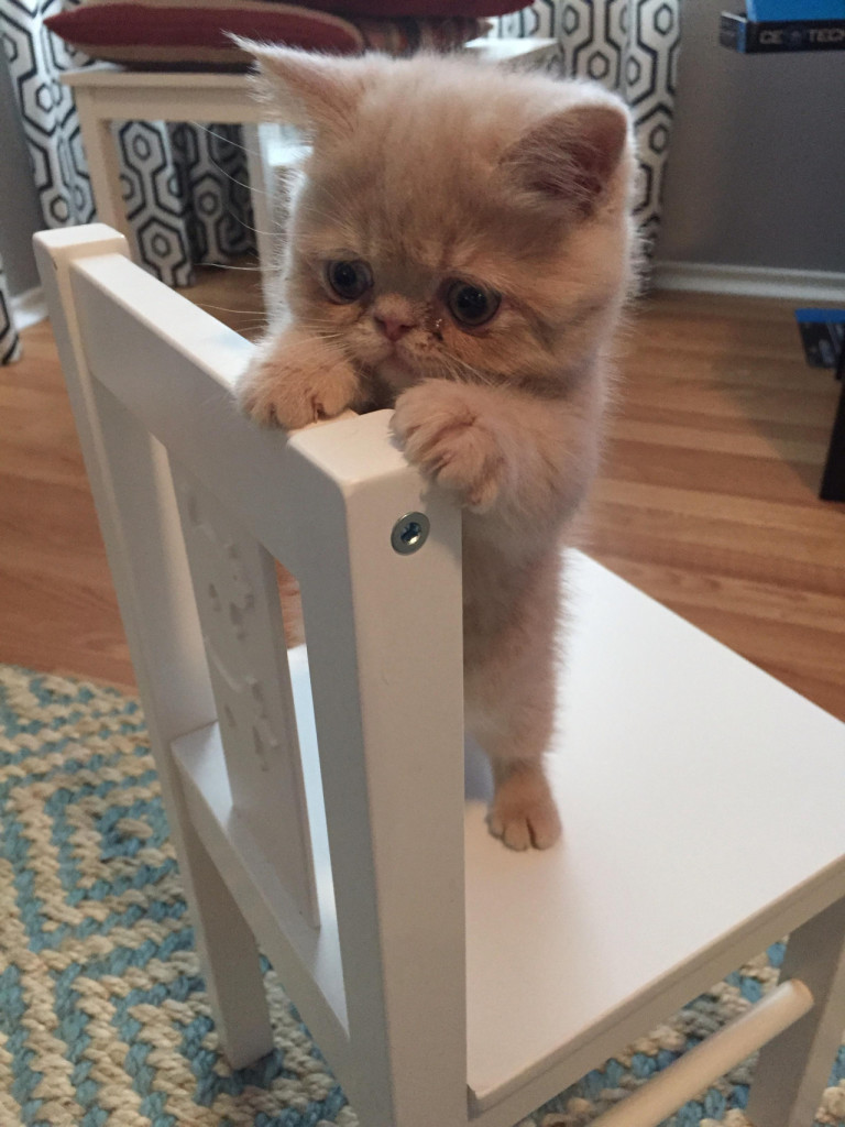 funny baby kittens
