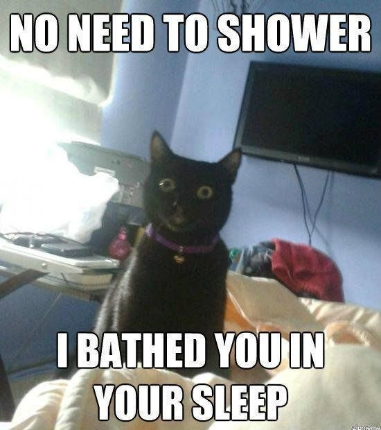 funny cat captions