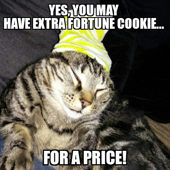 funny cat pictures with quotes